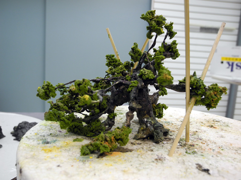 The annual bonsai association show sugar trees sumie for Painting with a twist cedar hill tx