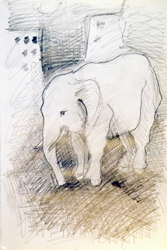 Josiane Keller - elephant sketch for Nina Hart