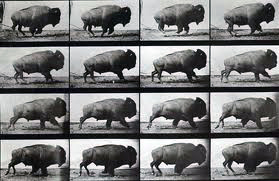 Eadweard Muybridge - buffalo running