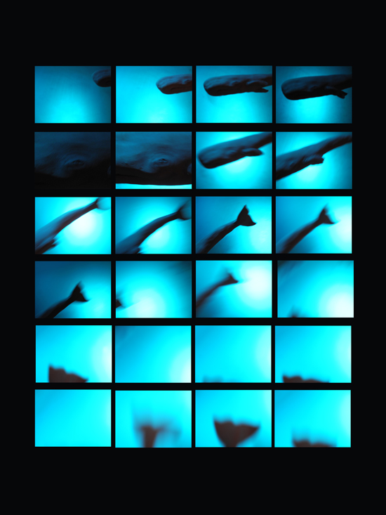 Josiane Keller - contact sheet diving sperm whale #4