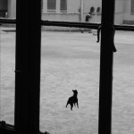 Josiane Keller - picture of a picture - picture of a dog