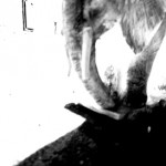 Josiane Keller - Elephant 5