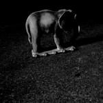 Josiane Keller - Elephant 6