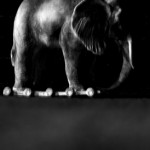 Josiane Keller - Elephant 8