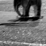 Josiane Keller - Elephant 9