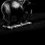 Josiane Keller - Elephant 17