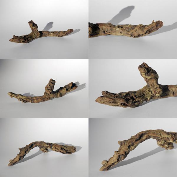 Josiane Keller - brown dry twig