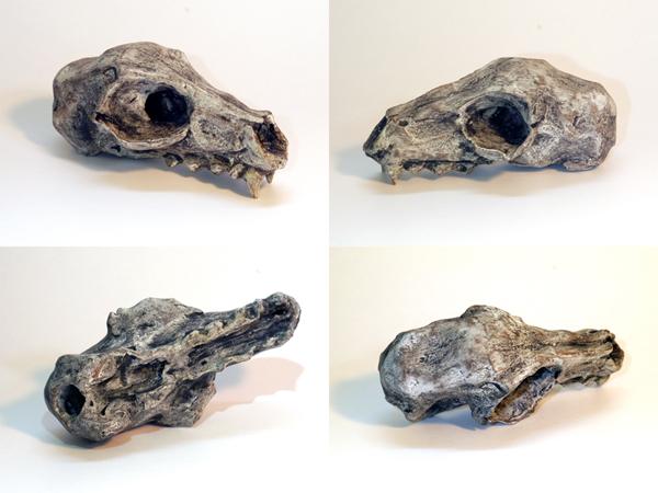 Josiane Keller - small skull